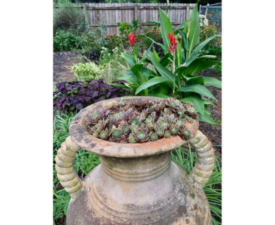 succulents in an outdoor container