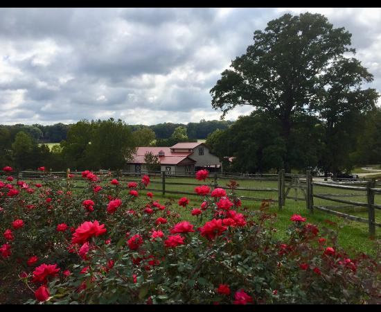 rose garden overlooking barn